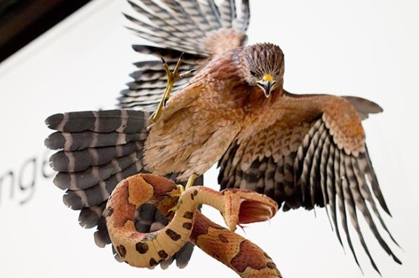 birdsnake