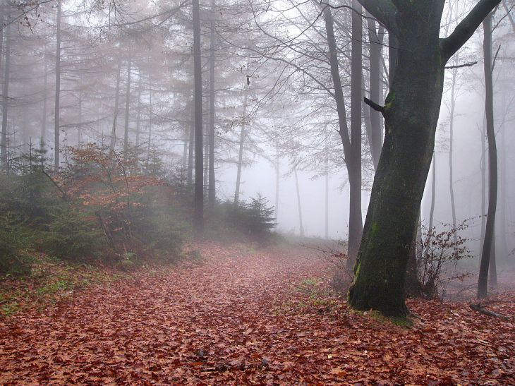 battlecast teutoberg forest